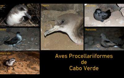 Aves marinhas da ordem Procellariiformes – um estilo de vida curioso – Parte 1